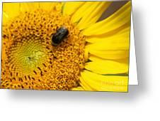 Bee On Sunflower Greeting Card