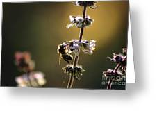 Bee On The Basil Greeting Card