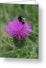 Bee On Thistle Greeting Card
