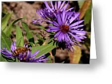 Bee On Wild Astor Greeting Card