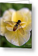 Bee On Yellow Flower Greeting Card