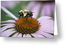 Bee Resting Squared Greeting Card