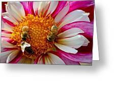 Bee Time Greeting Card