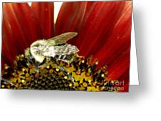 Bee Tip Toes Greeting Card