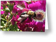 Bee With Cinearia Greeting Card