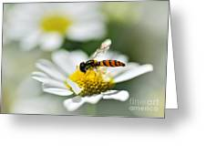 Bee With Rainbow Wings Greeting Card