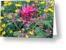 Beebalm Flower Greeting Card