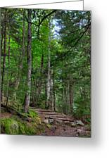 Beech Mountain Trail Acadia Greeting Card