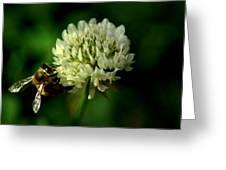 Beeflower2 Greeting Card