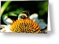 Beeing Healthy With Echinacea Pow Wow Greeting Card
