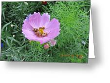 Bees Feeding Greeting Card