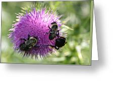 Bees On Thistle Greeting Card