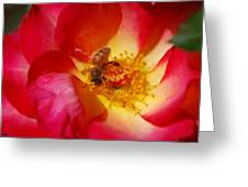 Beetobee Greeting Card