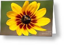 Beeutiful Greeting Card