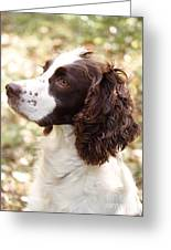 Before The Hunt - English Springer Spaniel Greeting Card