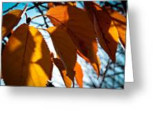 Before The Leaves Fall Greeting Card