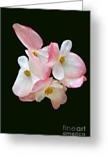 Begonia Flower Gems Greeting Card