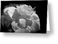 Begonia IIi Greeting Card