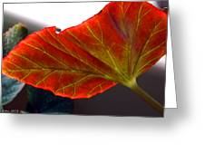 Begonia Leaf Greeting Card