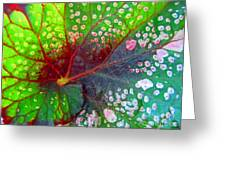 Begonia Leaf Greeting Card