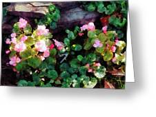 Begonias By Stone Wall Greeting Card