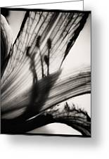 Behind The Petals Black And White Greeting Card