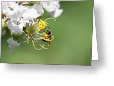 Being A Bee Greeting Card
