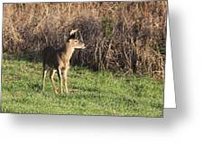 Being Aware - Deer Greeting Card