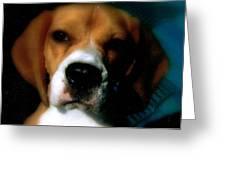 Bella The Beagle Greeting Card