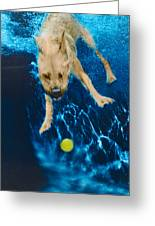 Belly Flop Greeting Card