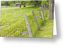 Belted Galloway Cows Farm Rockport Maine Greeting Card