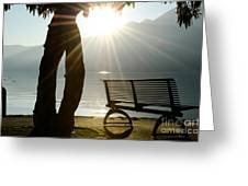 Bench And A Tree Greeting Card