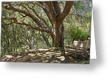 Bench And Tree In Cambria II Greeting Card