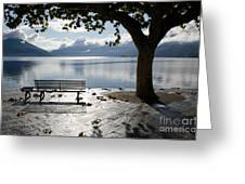 Bench And Tree On The Lakefront Greeting Card