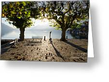 Bench And Trees On The Lake Front Greeting Card