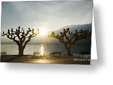 Benches And Trees On The Lakefront Greeting Card