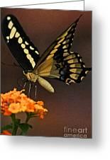 Beneath My Wing Greeting Card