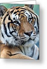 Bengal Greeting Card by Elizabeth Hart