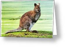 Bennets Wallaby  Greeting Card
