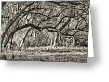Bent Trees Sepia Toned Greeting Card
