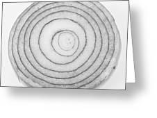 Bermuda Onion Spiral Bw Greeting Card