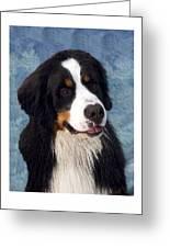 Bernese Mountain Dog 11 Greeting Card