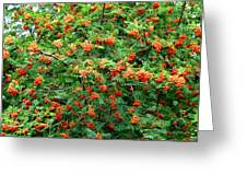 Berries In Profusion Greeting Card