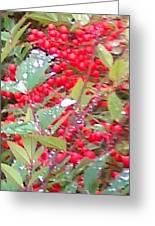 Berries On Rain Greeting Card