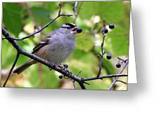Berry Hungry Bird Greeting Card