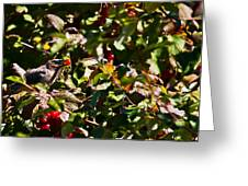 Berry Picking Greeting Card