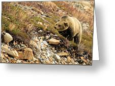 Berry Sniffer Greeting Card