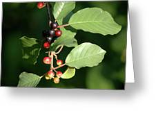 Berry Stages Greeting Card