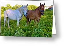 Best Buds Out To Pasture Greeting Card