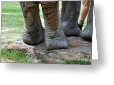 Best Foot Forward Greeting Card by Joanne Kocwin